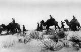 Romanian troops using camels for crossing the Caucasian wastelands.